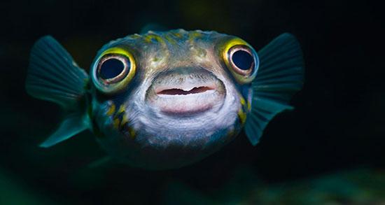 تعبیر خواب ماهی قرمز کوچک زیاد سیاه در حوض و در حال مردن و گرفتن ماهی